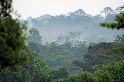 gallery/497px-Forests_and_Woodlands,_Ashanti_region,_South_Ghana